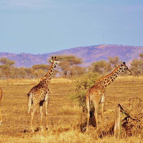 South Africa Tour Package from Chan's World Holidays