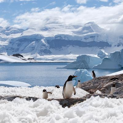 South Shetland Islands Tour Package from Chan Brothers Travel