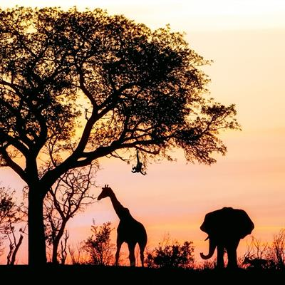 South Africa Free & Easy Package from Chan Brothers Travel