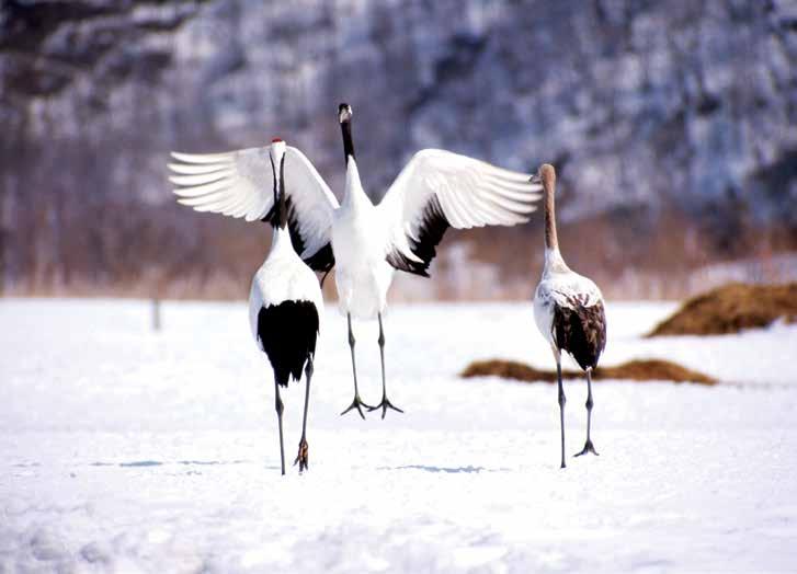Hokkaido Travel Package