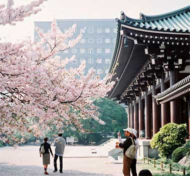japan Free & Easy Package from Giamso